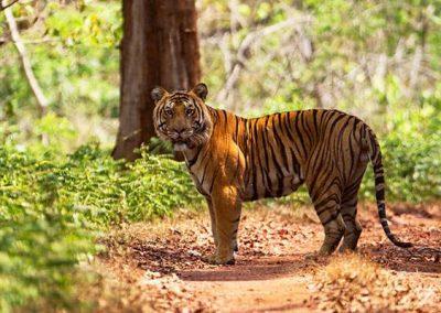 Anshi Tiger Reserve